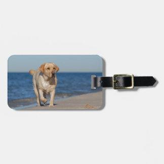 Labrador retriever amarillo en la playa etiquetas para maletas