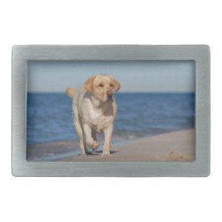 Labrador retriever amarillo en la playa hebilla cinturón rectangular