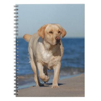 Labrador retriever amarillo en la playa libros de apuntes con espiral