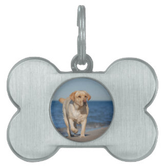 Labrador retriever amarillo en la playa placa mascota