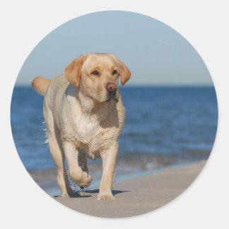 Labrador retriever amarillo en la playa pegatina redonda