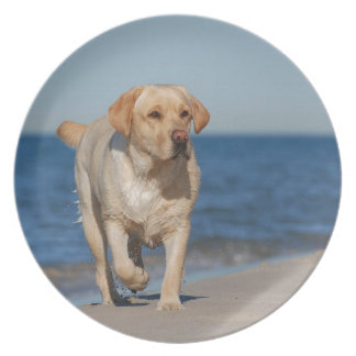 Labrador retriever amarillo en la playa plato para fiesta