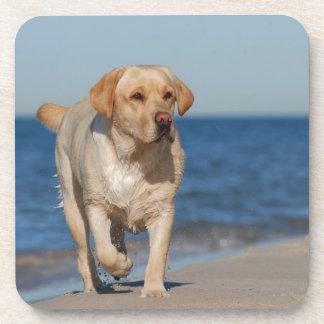 Labrador retriever amarillo en la playa posavasos de bebida