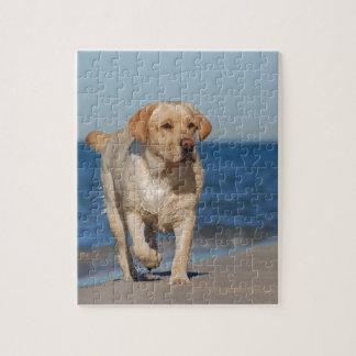 Labrador retriever amarillo en la playa rompecabezas