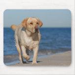 Labrador retriever amarillo en la playa alfombrilla de ratones