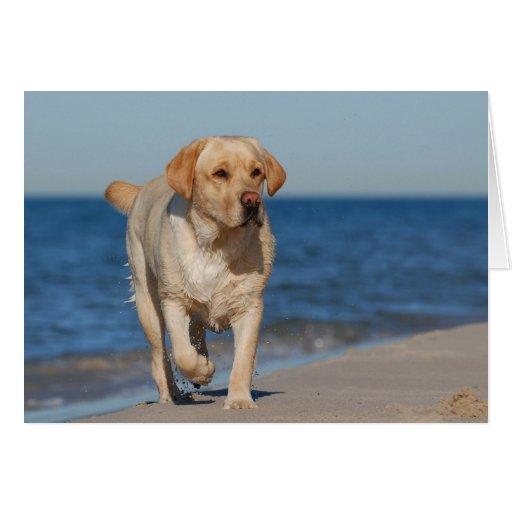 Labrador retriever amarillo en la playa tarjeta