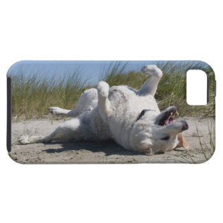 Labrador retriever amarillo iPhone 5 fundas