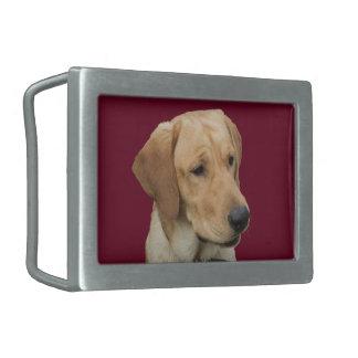 Labrador retriever amarillo hebillas de cinturon rectangulares