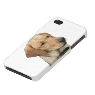 Labrador retriever amarillo iPhone 4 carcasas