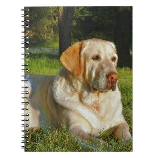 Labrador retriever amarillo libros de apuntes