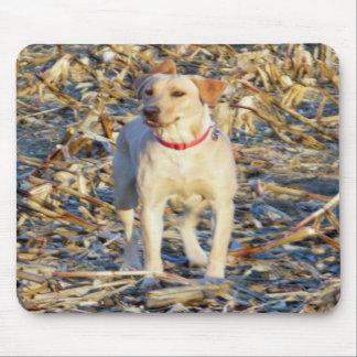 Labrador retriever amarillo Mousepad