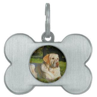 Labrador retriever amarillo placa de mascota