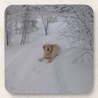 Labrador retriever amarillo que miente en Sn fresc Posavasos De Bebida