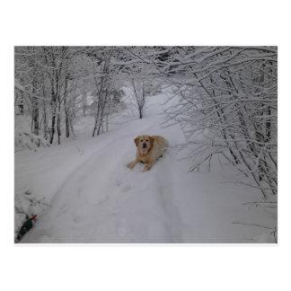 Labrador retriever amarillo que miente en Sn fresc Postales