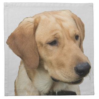 Labrador retriever amarillo servilleta