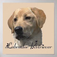 Yellow Labrador Retriever Art Prints