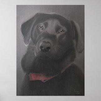 Labrador Retriever Beautiful Poster