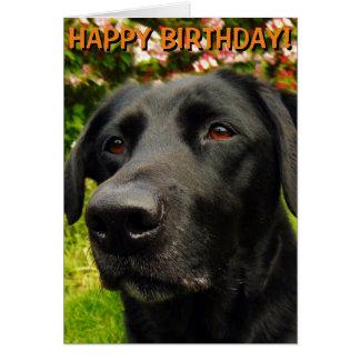 Labrador Retriever birthday card