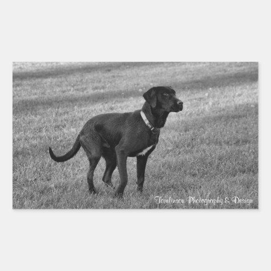 Labrador Retriever Black and White Photography Sti Rectangular Sticker