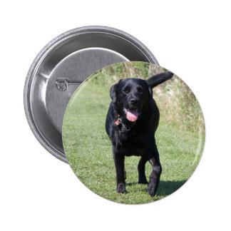 Labrador Retriever black dog, beautiful photo Pins
