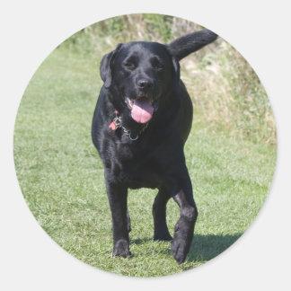 Labrador Retriever black dog, beautiful photo Classic Round Sticker