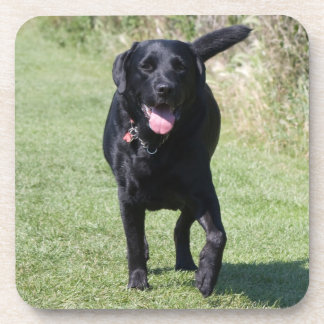 Labrador Retriever black dog beautiful photo, gift Beverage Coaster