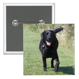 Labrador Retriever black dog beautiful photo, gift Pinback Button