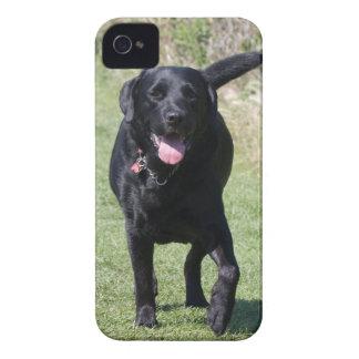 Labrador Retriever black dog beautiful photo, gift iPhone 4 Case
