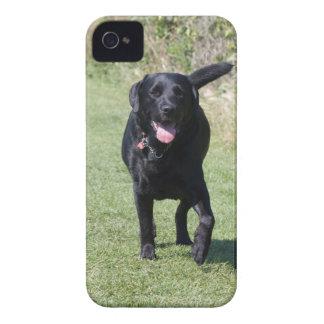 Labrador Retriever black dog beautiful photo, gift iPhone 4 Case-Mate Case