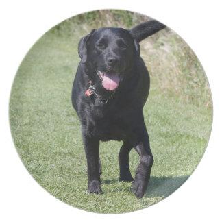 Labrador Retriever black dog beautiful photo, gift Melamine Plate