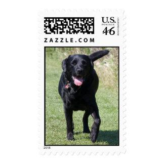 Labrador Retriever black dog beautiful photo Postage Stamp