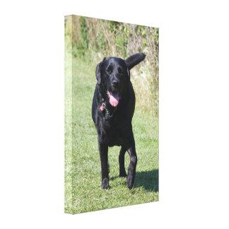 Labrador Retriever black dog beautiful photo print Stretched Canvas Print