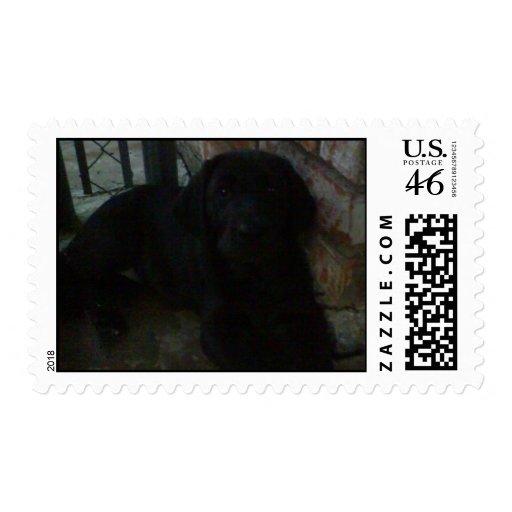 Labrador Retriever black lab puppy Stamp