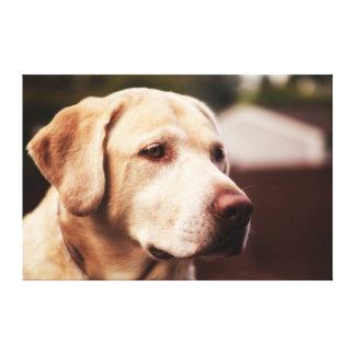 Labrador Retriever Gallery Wrap Canvas