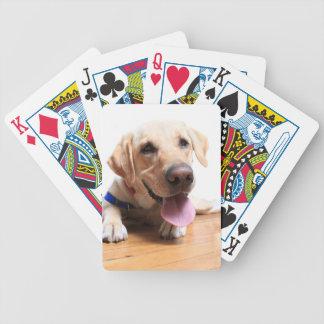 Labrador retriever baraja cartas de poker