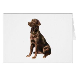 Labrador Retriever - Chocolate 1 Greeting Card