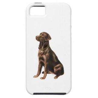 Labrador Retriever - Chocolate 1 iPhone 5 Case
