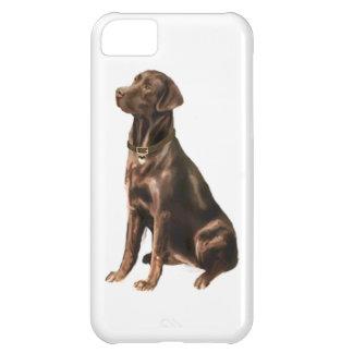 Labrador Retriever - Chocolate 1 iPhone 5C Cover