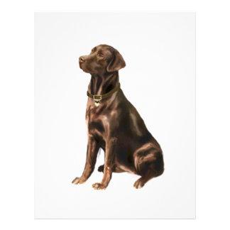 Labrador Retriever - Chocolate 1 Personalized Letterhead