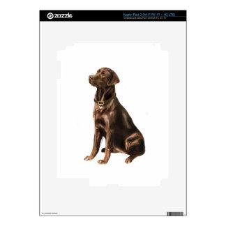 Labrador Retriever - Chocolate 1 Skin For iPad 3