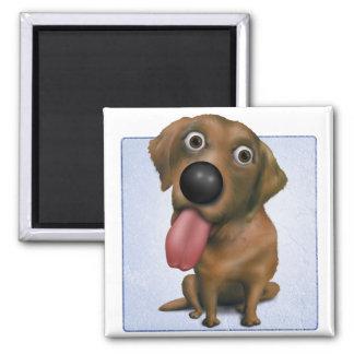 Labrador retriever (chocolate) imán cuadrado