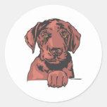 Labrador retriever, chocolate pegatina redonda