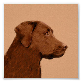 Labrador Retriever (Chocolate) Poster