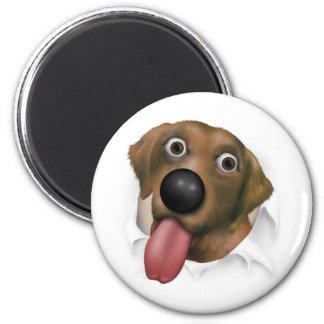 Labrador retriever (chocolate) que revienta hacia  imán redondo 5 cm