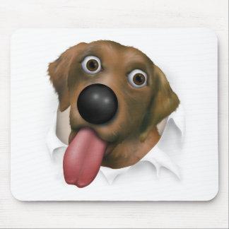 Labrador retriever (chocolate) que revienta hacia  tapete de raton