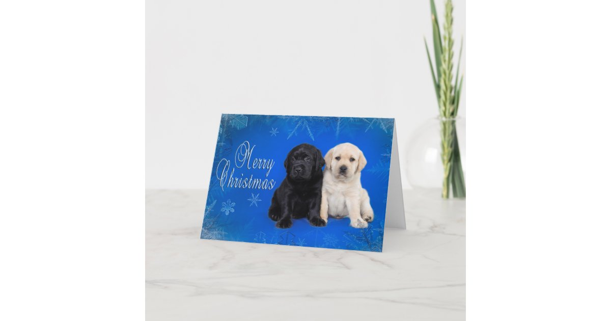 Labrador retriever christmas card | Zazzle.com