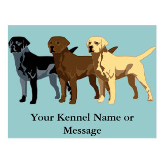 Labrador Retriever colors Postcard