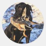 Labrador retriever con el pato silvestre de Drake Pegatina Redonda