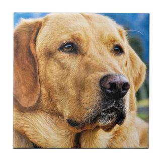 Labrador retriever de oro azulejo cuadrado pequeño