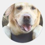Labrador retriever de oro pegatinas redondas